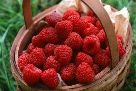 frutti di bosco (lamponi, more, mirtilli, ribes)
